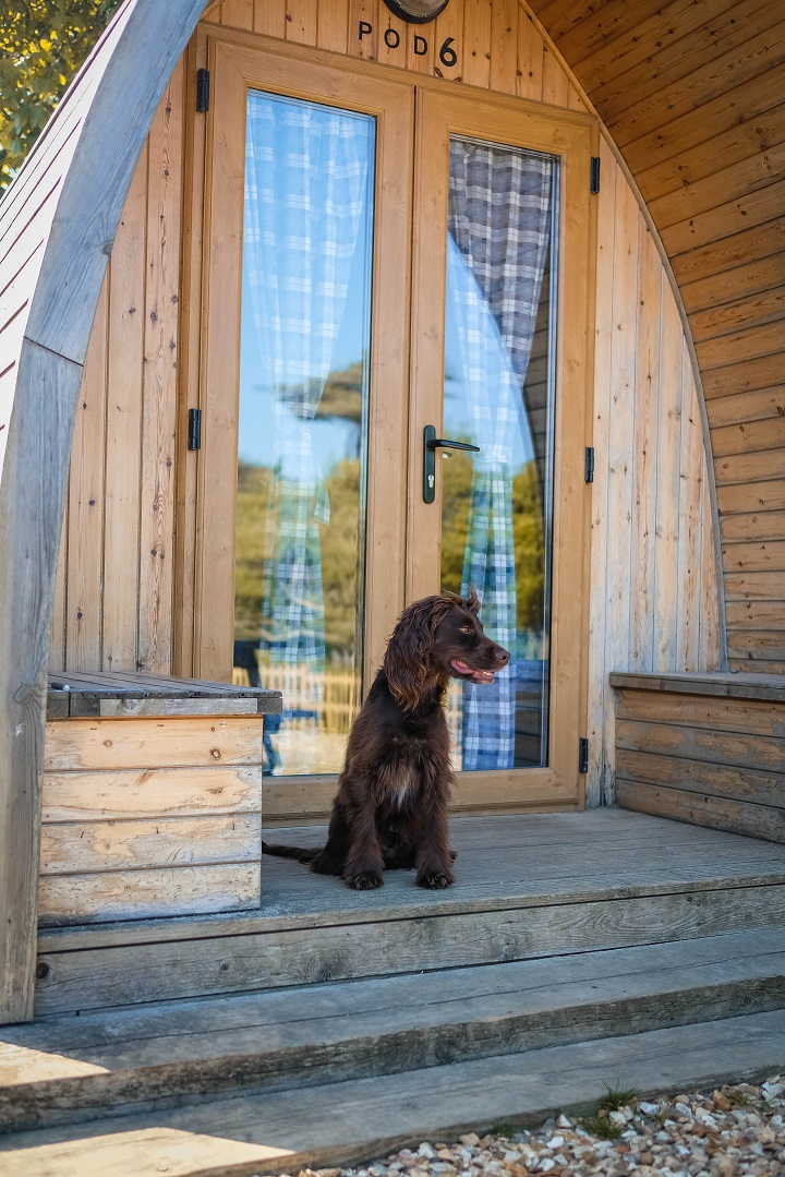 Dog Friendly Summer Trip Ideas