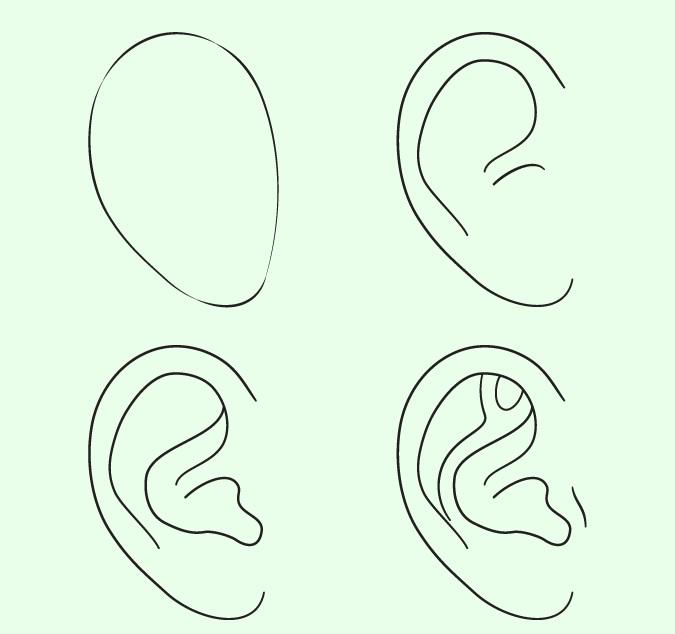 Menggambar telinga langkah demi langkah