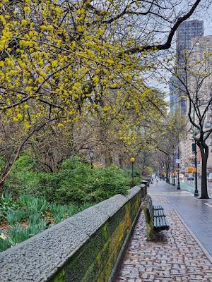 Central Park durante a pandemia