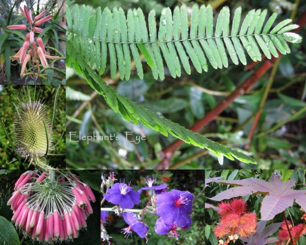Plants in the Zurich Botanical Garden