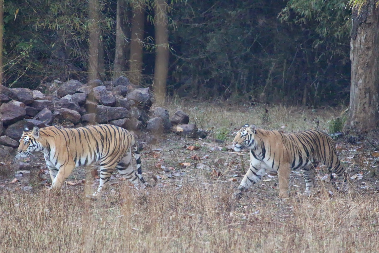 Tiger hoppas pa en sondags repris