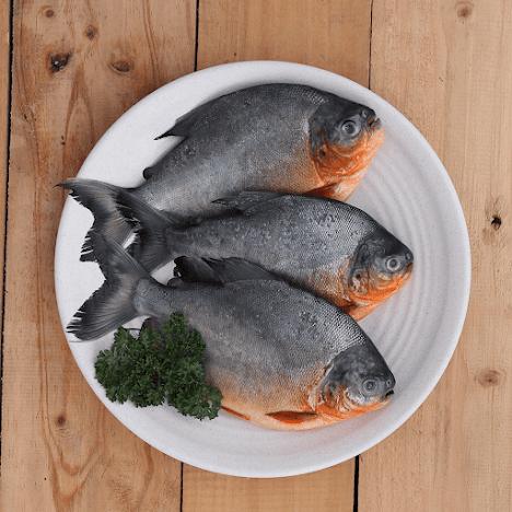 Cari Informasi Supplier Jual Ikan Bawal Bibit & Konsumsi Mataram, Nusa Tenggara Barat Terlaris
