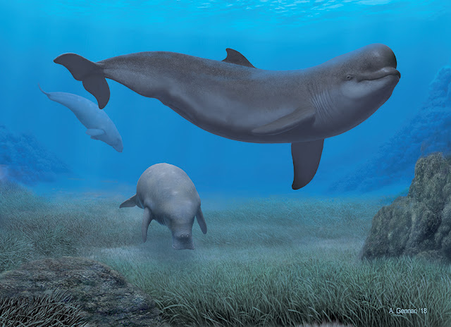 The ancestors of the beluga and narwhal lived in the tropical waters of the Mediterranean