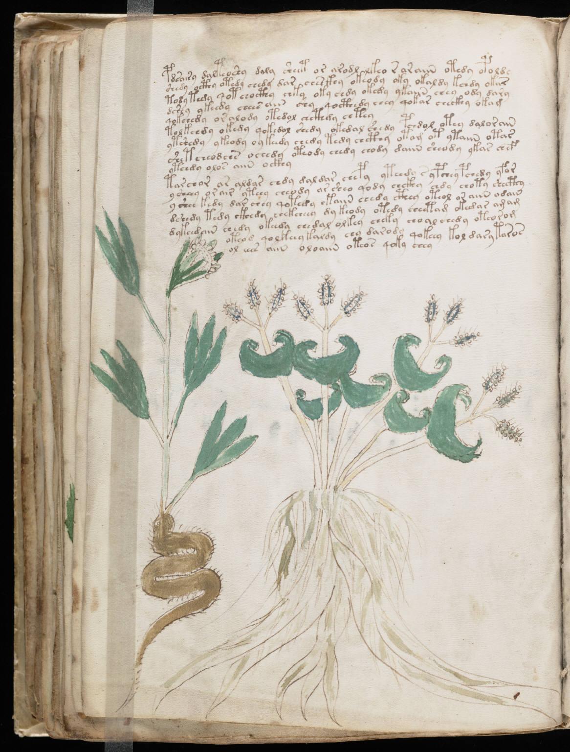 manuscrito084