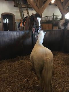 Puola, Galiny, ratsastustmatka, Horsexplore