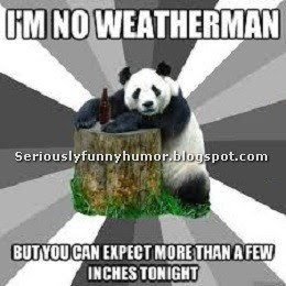 Funny sexy meme Panda background - I'm no weatherman, but you can expect more than a few inches tonight