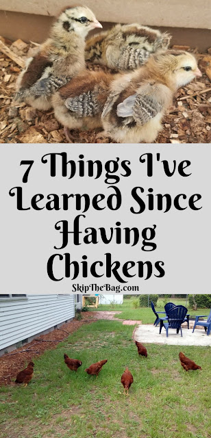 7 things I've learned since raising backyard chickens