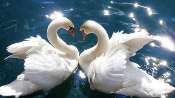 Бытовая магия: 7 предметов, которые привлекают в дом любовь и укрепляют брак