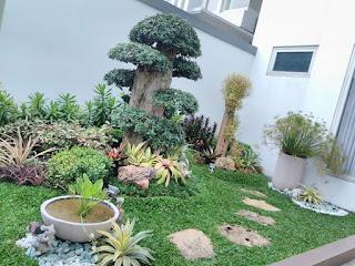 Taman minimalis dengan bonsai dolar