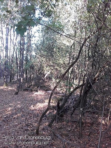 Bäume auf Abraumhügel