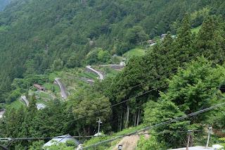 中井侍の急斜面にある茶畑