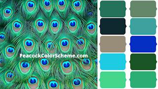 Peacock Color Scheme