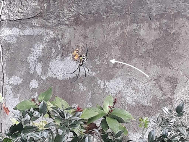 Terrifying garden spider