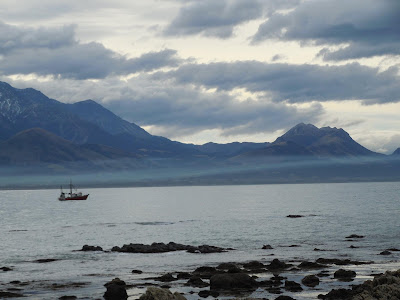 My first walk in Kaikoura, a seal encounter by Sylvia Landez