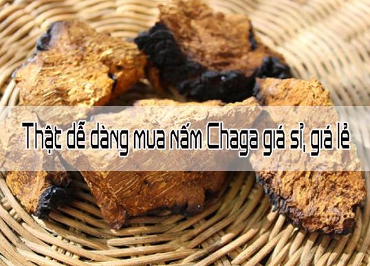 Thật dễ dàng mua nấm Chaga giá sỉ, giá lẻ