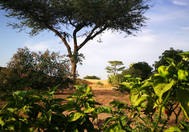 LE SENEGAL FAIT LE PARI DE L'ECOLOGIE : Projets, plan, développement, économie, agriculture, énergie, PSE, LEUKSENEGAL, Dakar, Sénégal, Afrique