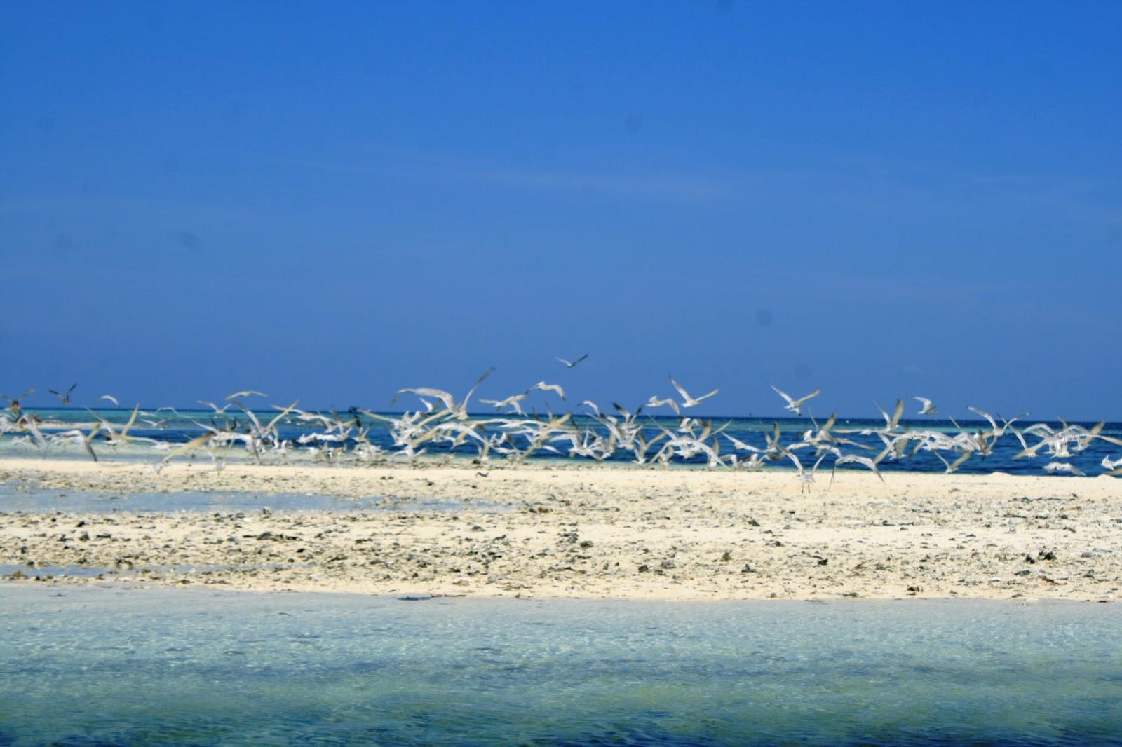 Pulau Lapang | Sumber: Menatap Alor NTT