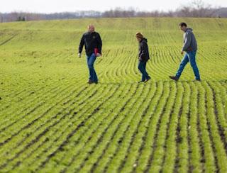 people walking in wheat field