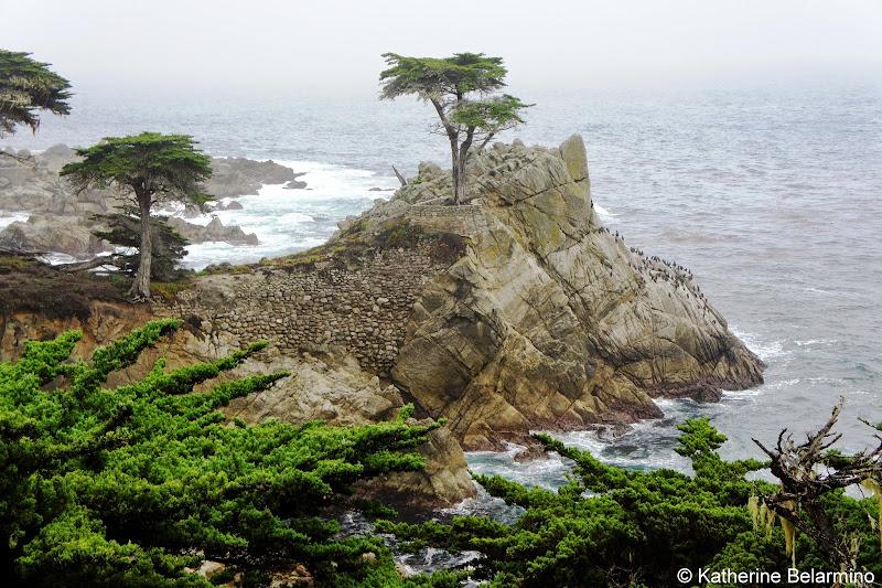 The Lone Cypress 17-Mile Drive Monterey Peninsula California