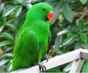 Few lines on Parrot in Hindi