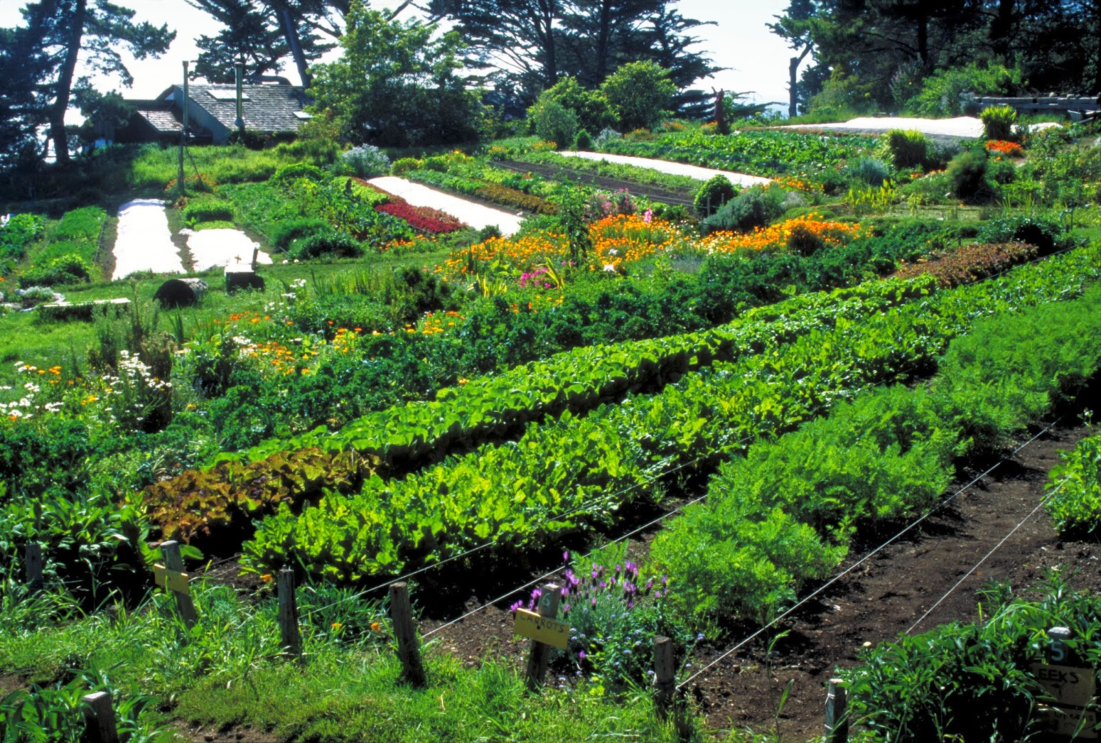 LocalOrg: Permaculture: A Healthy Sustainable Alternative ... on Backyard Permaculture Design id=70766