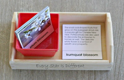 Chinese New Year Blossom Picture and Description Cards