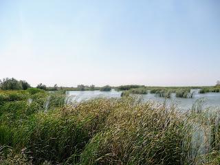 Ландшафтный заказник «Бакаи». Река Волчья возле Васильковки Днепропетровской обл.