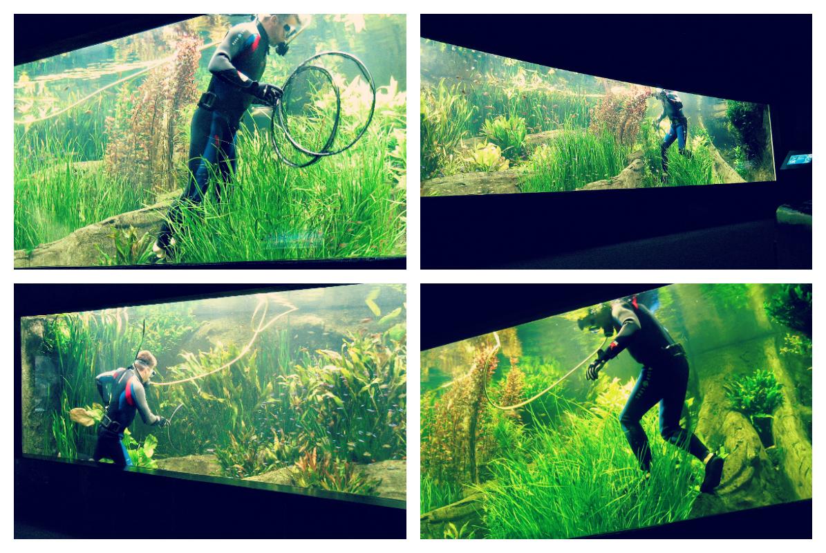 Nurek czyszczący akwaria w hamburskim zoo.