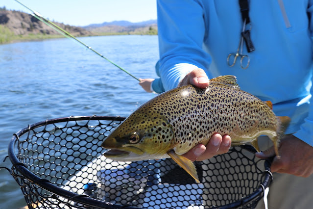 Freshwater Trout – A Breakdown of the Species