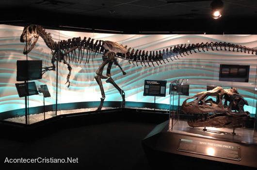 Fósil de dinosaurio que murió en Diluvio