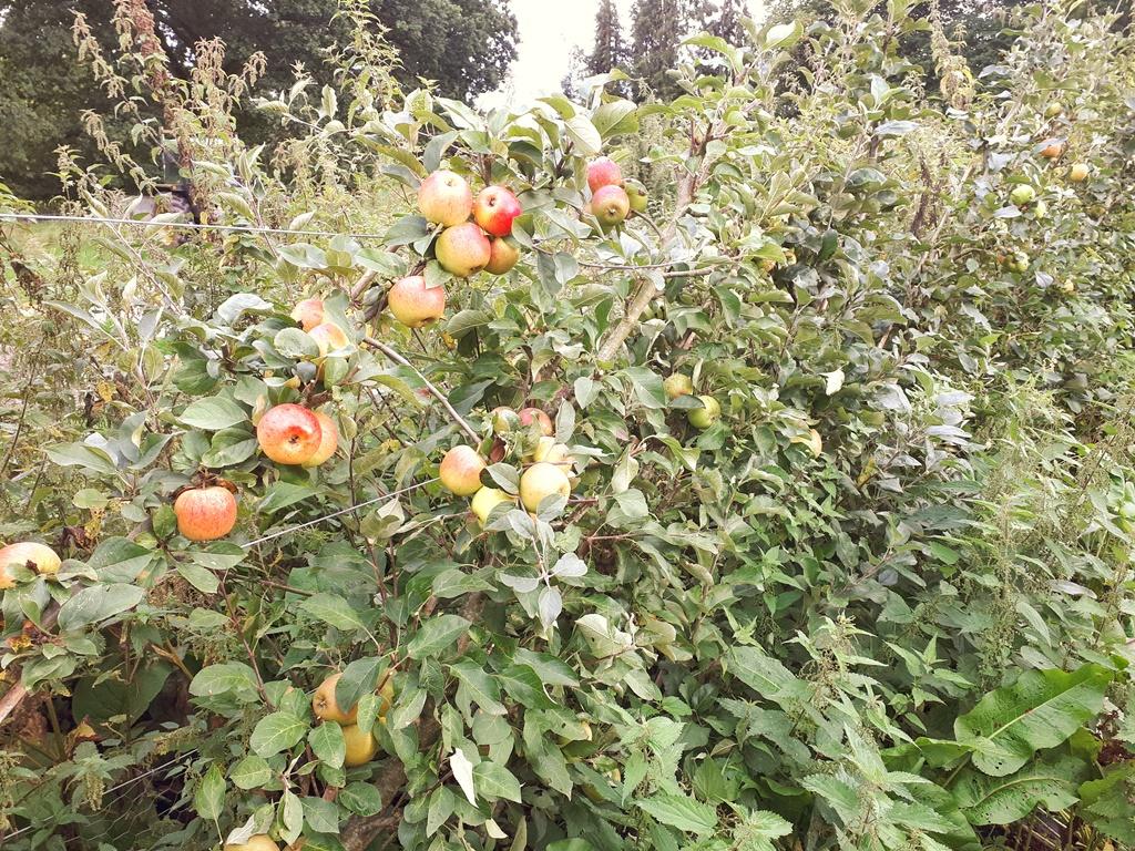 An English Homestead Apple Diversity