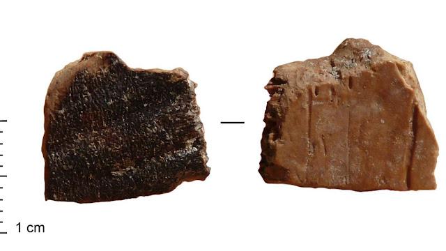Prehistoric man had a penchant for tortoises