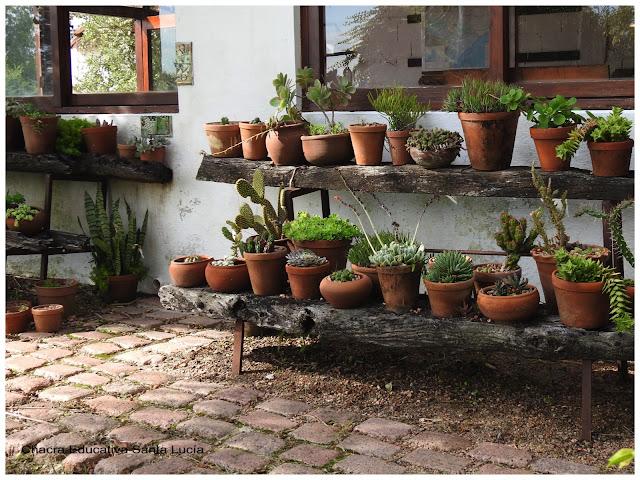 Cactus, crasas y suculentas en maceta-Chacra Educativa Santa Lucía