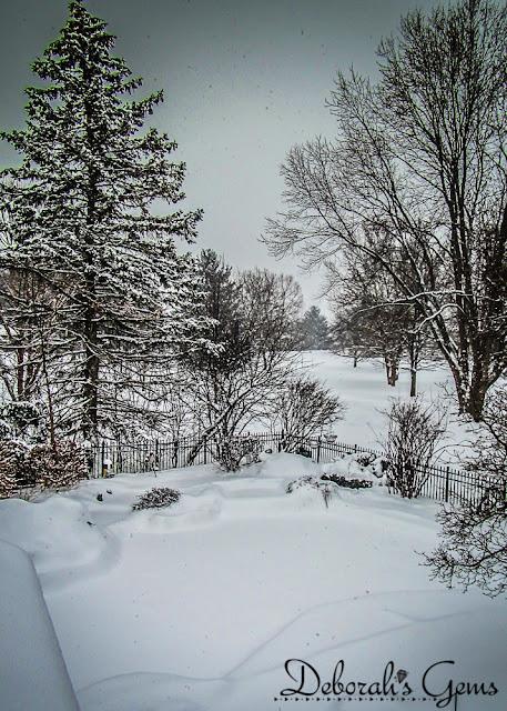 Winter 1 - photo by Deborah Frings - Deborah's Gems