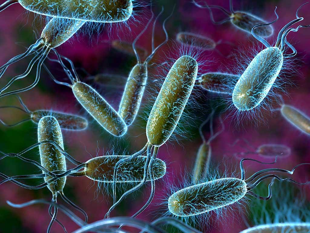 Bakterilerin Hücre Dış Yapısı Hakkında Bilgi