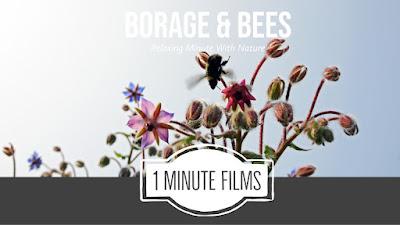 Borage & Bees Short Nature Film