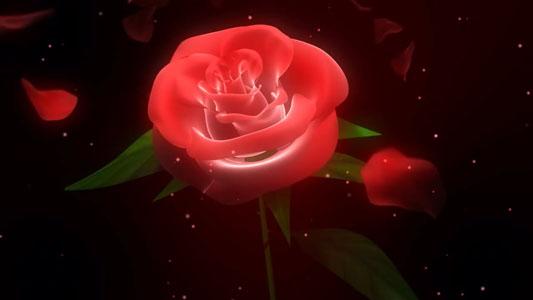 تحميل فيديو ورق ورد متساقط لمونتاج فيديوهات الأعراس بدقة HD. 3D Wedding Rose Petals Free Background HD