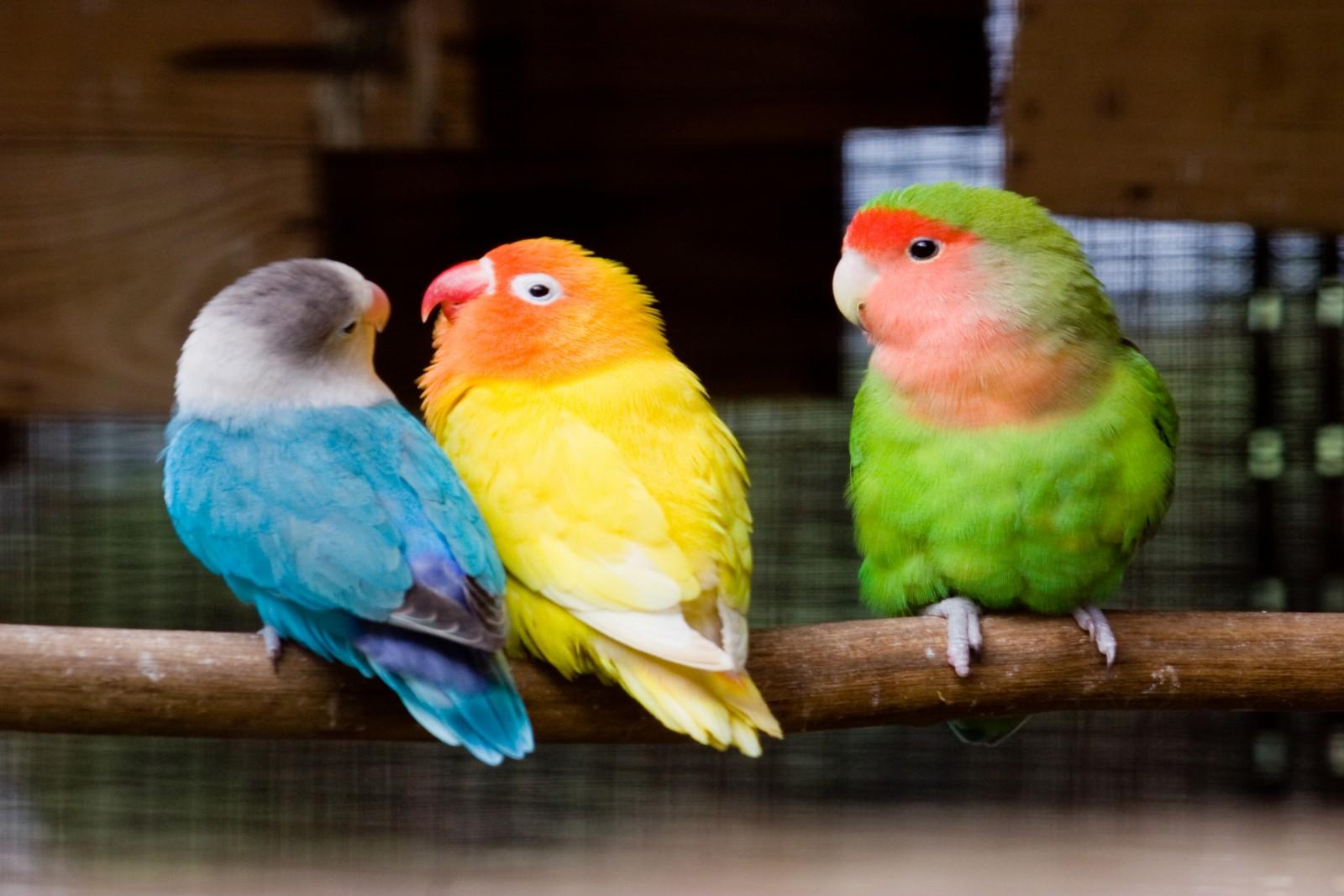 A jealous bird.