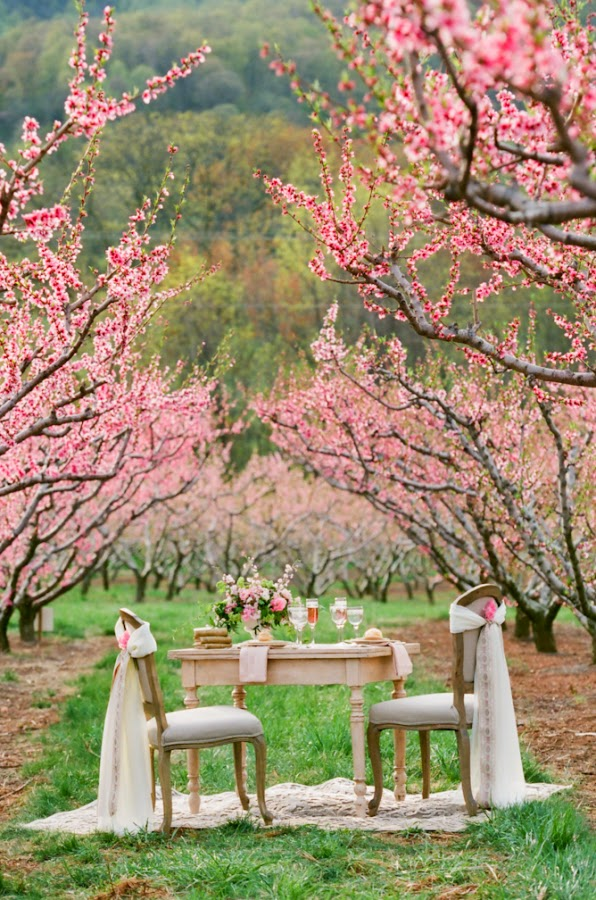 cherry blossom decorations for a wedding a wedding theme less ordinary cherry blossom wedding 2773