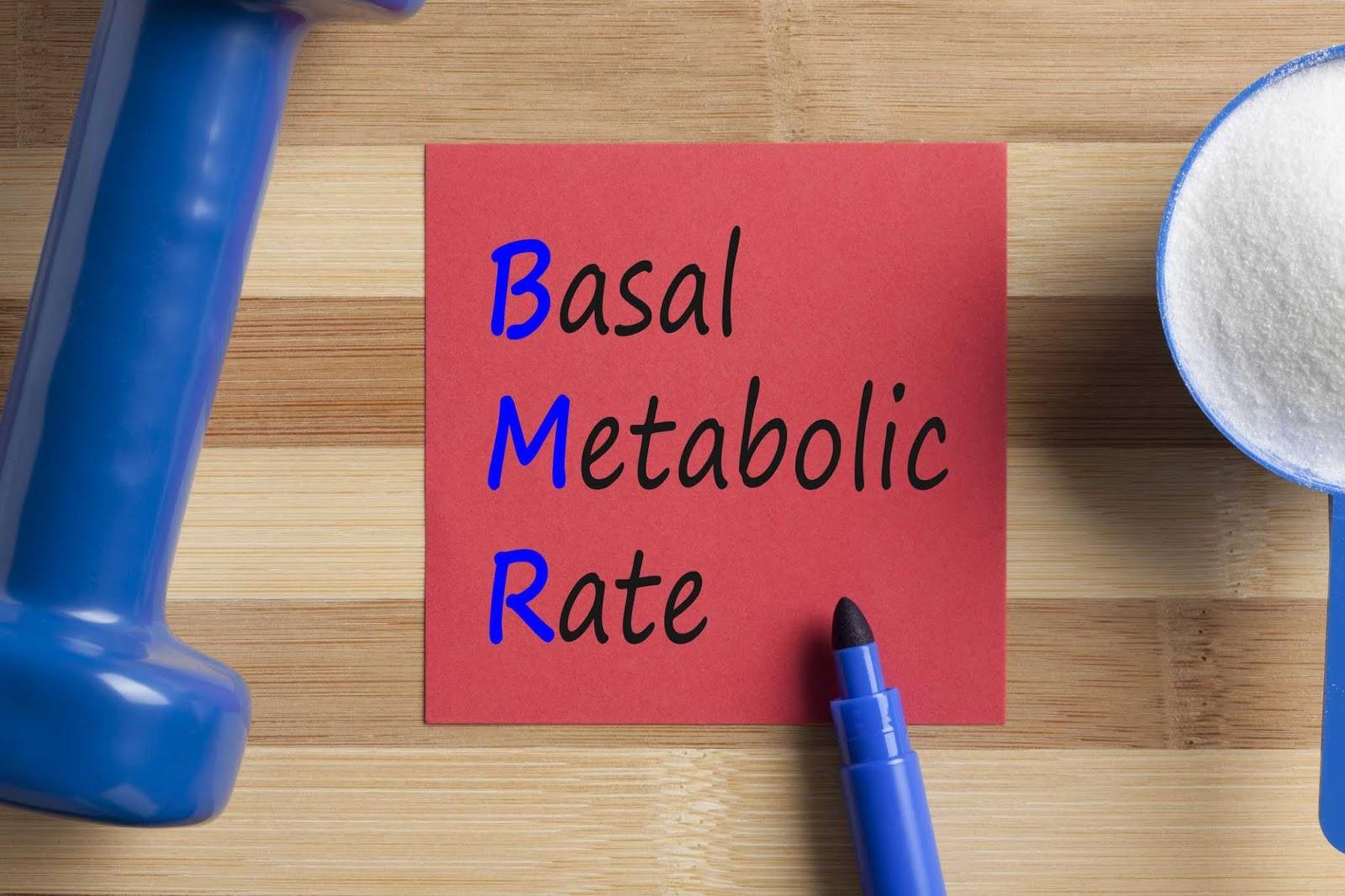 BMR (Basic Metabolic Rate)
