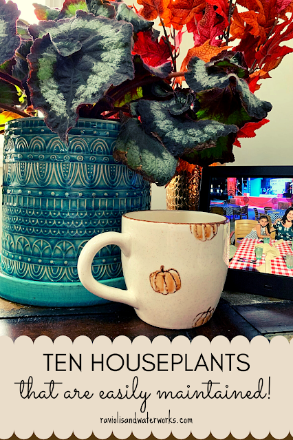 houseplants that are hard to kill