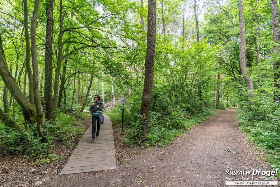Ścieżka Dąb Dominik w Poleskim Parku Narodowym