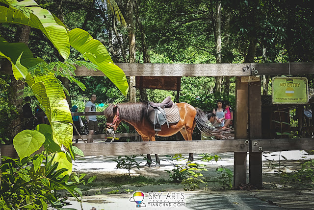 Little pony for kids ride at Lost World of Tambun
