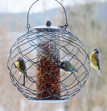 fuglene om vintern