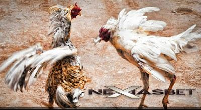 Adu Ayam