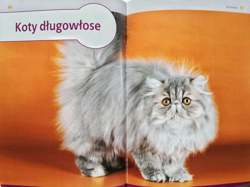 koty rasowe wybór opieka rasy, koty rasowe książka, koty rasowe recenzja, barbara tittenbrun-jazienicka, kocie rasy, książka o kocich rasach