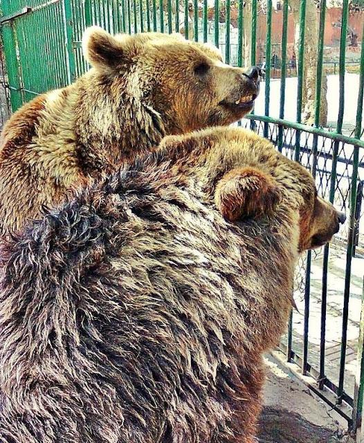 الحيوانات في حديقة حيوان الإسكندرية Alexandria Zoo Animals
