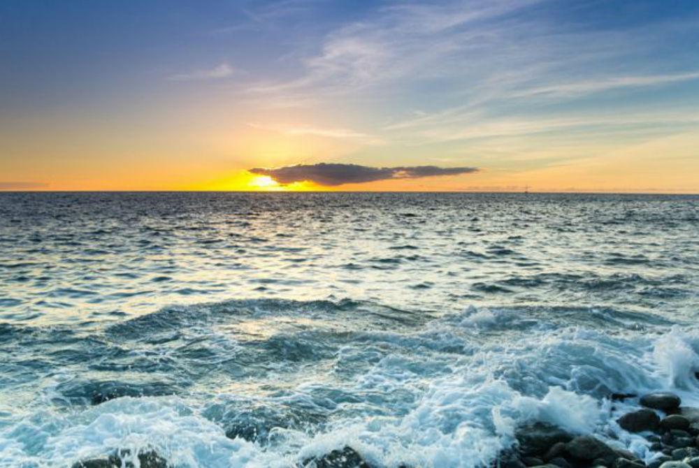 marine life in the atlantic ocean, atlantic ocean marine life,  mid atlantic ocean marine life