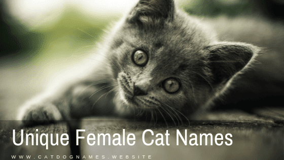 Unique Female Cat Names For Grey, Black And White Name List 2020