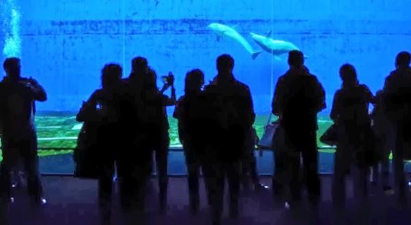 Quali sono gli acquari pi grandi e belli d italia il for Acquario tartarughe grandi